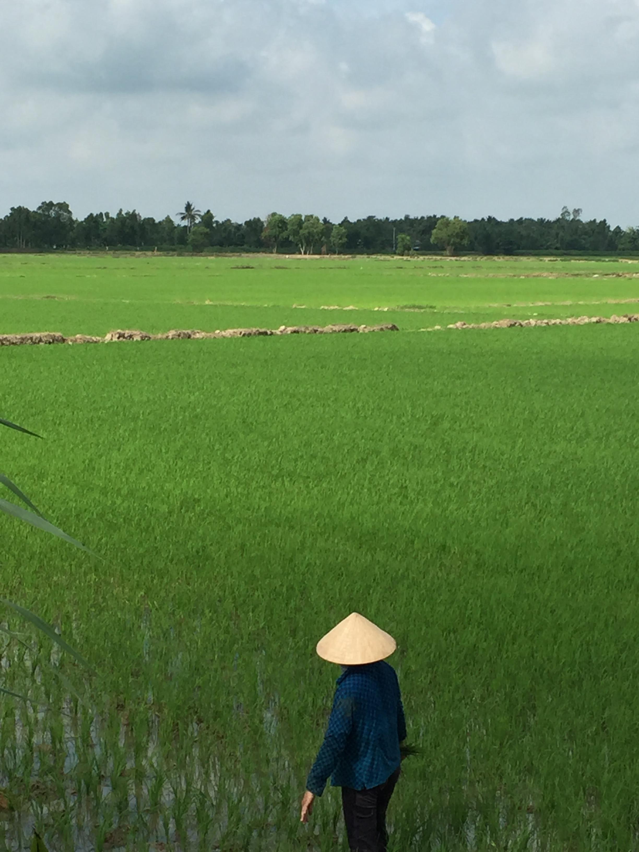 vietnamrice